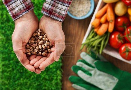 Photo pour Fermier tenant des légumineuses dans ses mains avec de l'herbe verte et des légumes fraîchement récoltés sur fond - image libre de droit