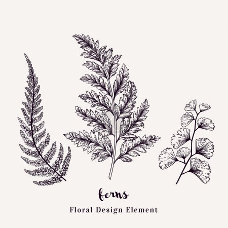 Illustration for Set with ferns. Plants with leaves isolated on white background. Vector design elements. Black and white. - Royalty Free Image