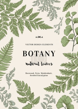 Illustration for Botanical illustration with leaves. Boxwood, seeded eucalyptus, fern, maidenhair. Engraving style. Design elements. Black and white. Vector. - Royalty Free Image
