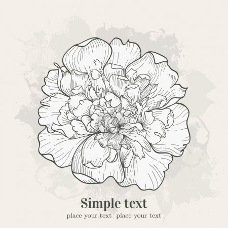 Illustration for Vector background with single peony. Hand drawn illustration. - Royalty Free Image