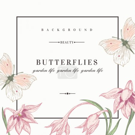 Illustration for Summer background with flowers and butterflies. Vector illustration. Acidanthera flowers. - Royalty Free Image