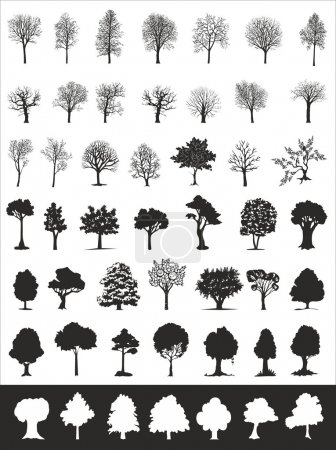 Illustration for Trees, vector collection - Royalty Free Image