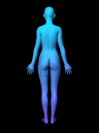 woman body