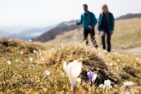 Photo pour Fleurs de premier plan avec randonneurs marchant en arrière-plan - image libre de droit