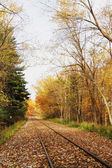 Railroad track in the autumn forest.