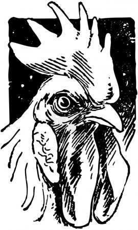 Illustration for Handsome Rooster - Royalty Free Image