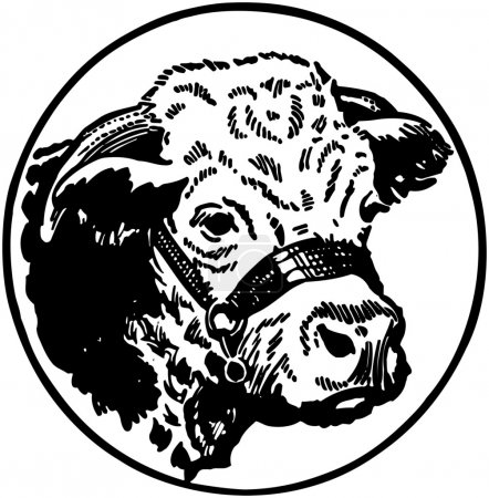 Photo for Black and white illustration of Cow - Royalty Free Image