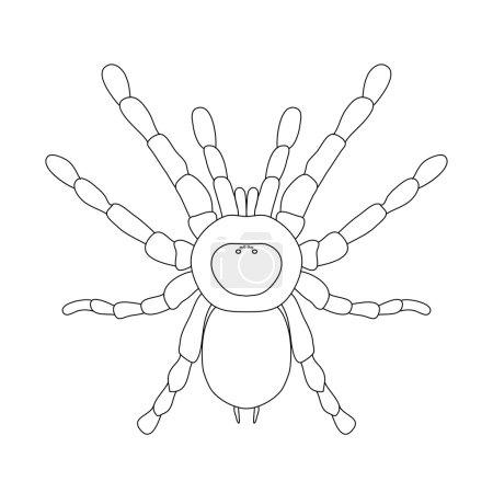 tarantula spider Brachypelma smithi, spider female. spider top view. Sketch of spider
