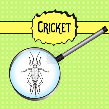 insect in magnifier cricket grig