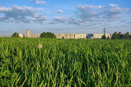 Photo pour Herbe et maisons à la périphérie de la ville - image libre de droit