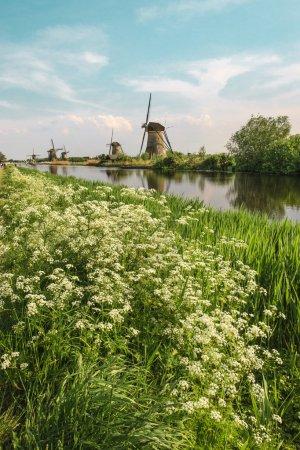Photo pour Moulins à vent traditionnels néerlandais avec herbe verte au premier plan, Pays-Bas - image libre de droit