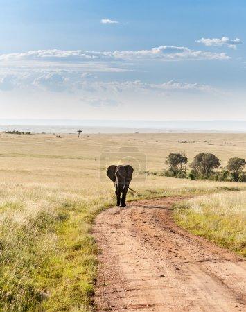 Photo pour Un éléphant africain marche dans la savane - image libre de droit
