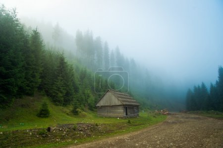 Photo pour Beautiful green pine trees in fog on Carpathian mountains in Ukraine. - image libre de droit