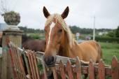"Постер, картина, фотообои ""Лошадей за забором."""