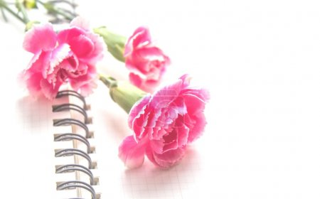 Carnations on white background
