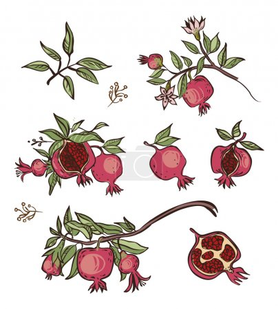 Vector pomegranate