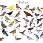 Постер, плакат: big set of birds