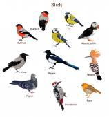 Big set birds vector illustration