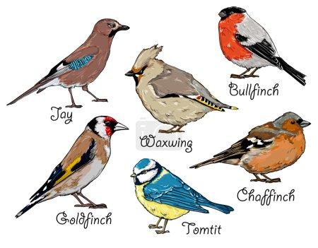 Set of hand drawn birds