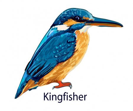 kingfisher bird animal