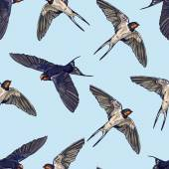 Swallow birds seamless background