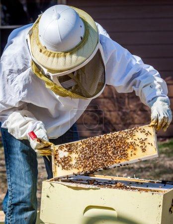 Photo pour Un apiculteur inspecte un cadre qu'elle a sorti de la ruche - image libre de droit