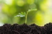 Mladá rostlina, rostoucí z půdy
