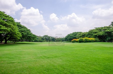 green grass field with tree background