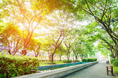 """Постер, картина, фотообои """"вид на зеленый парк в городе"""""""
