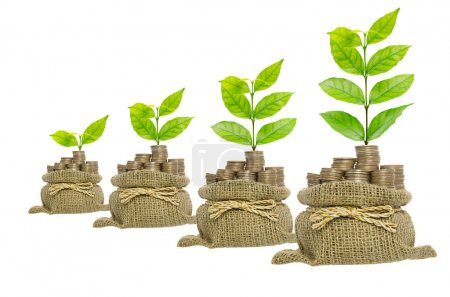 Growing plant in coins bag isolated on white background , busine