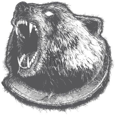 Growling Bear Vector Illustration