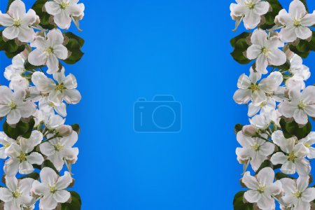 background with a border of flowers