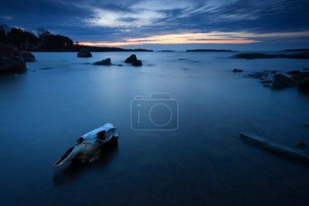 Photo pour Le crâne de la vache et la lumière bleue tôt le matin, photographié dans la plage d'Uutela, Helsinki. - image libre de droit