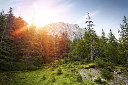 Photo pour Forêt avec des montagnes à l'arrière-plan. Ciel bleu avec quelques nuages. Le rayon de soleil brille à travers certains des arbres sur le côté gauche de l'image. Forêt avec un petit espace d'herbe verte. - image libre de droit