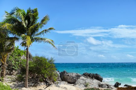 Coconut palm tree at rocky white sand beach on a windy day