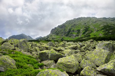 Rocks and green bushes in front of mountain peak - beautiful natural background