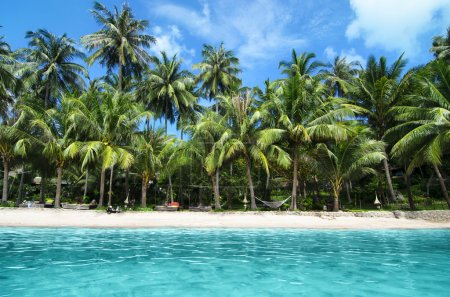 Lovely White Sand Beach with Turquoise Water and Green Palm Trees on a Tropical Isle