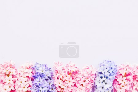 Photo for Colorful Hyacinths border on a light background. Top view, copy space for text - Royalty Free Image