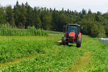 Organic farmer in tractor mowing clover field