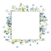 Forget-me-not blue forest flowers - nature square background