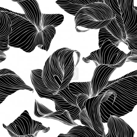 Flowers calla. Black on white