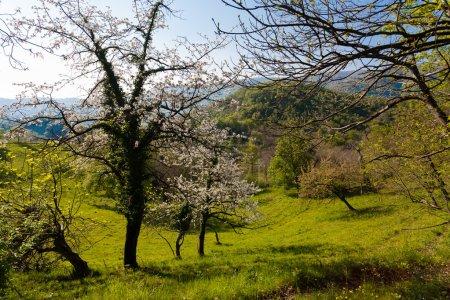 Foto de Un panorama de colinas italianas, hierba y árboles, primavera - Imagen libre de derechos