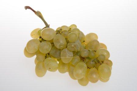 Photo pour Raisins verts frais Isolé sur blanc-Sauvignon - image libre de droit