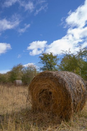 Photo for Round straw alpaca in the middle of the field - Royalty Free Image