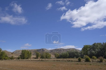 Photo for Mowed orchard in arid landscape and blue sky - Royalty Free Image