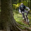 Mountainbiker rides on path in forest...