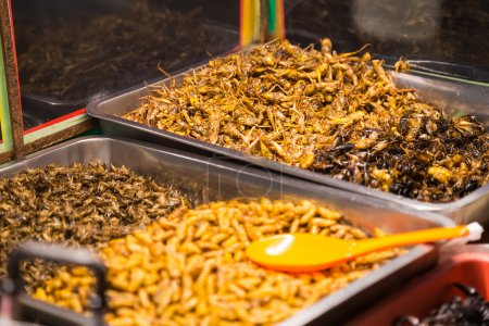 Fried insects like bugs grasshoppers