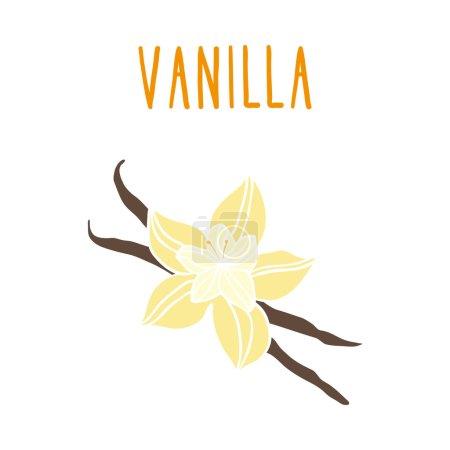 Illustration pour Haricots de vanille. Illustration vectorielle dessinée à la main EPS 10 - image libre de droit