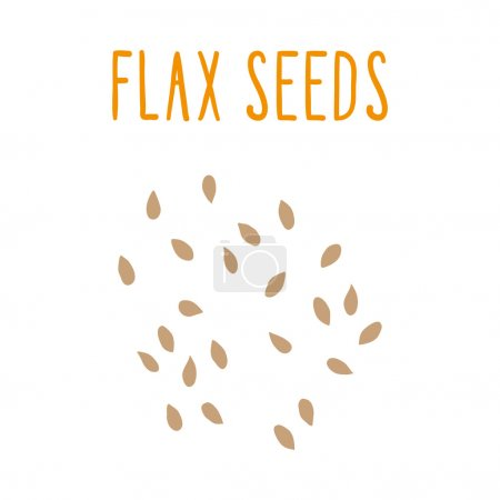 Illustration for Flax seeds. Vector EPS 10 hand drawn illsutration - Royalty Free Image