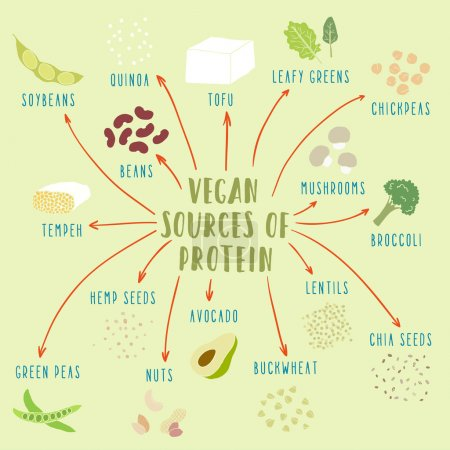 Vegan plant-based sources of protein
